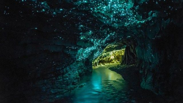 Waitomo_Glowworm_Caves_tour
